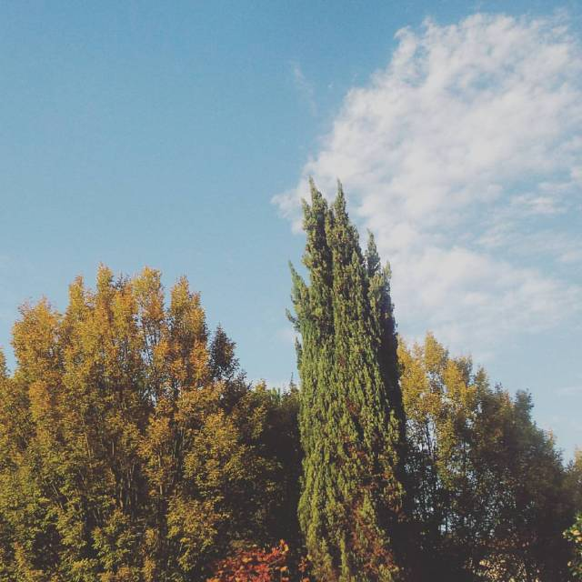 I love you and the #autumn #sky