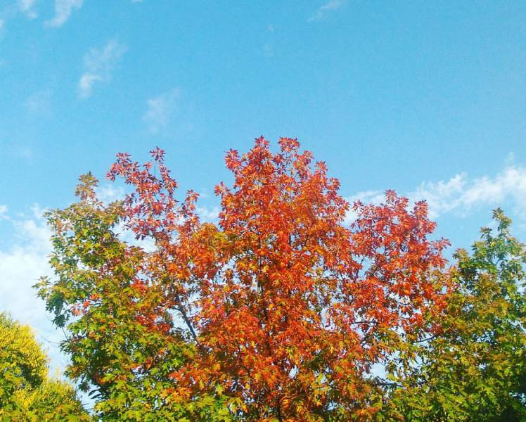 Up in the #autumn #sky